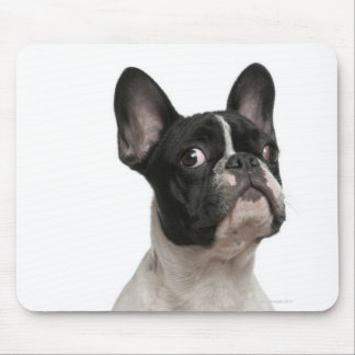 French Bulldog puppy (5 months old) Mouse Pad
