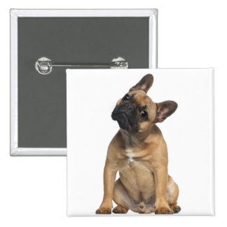 French Bulldog puppy (7 months old) 2 Inch Square Button