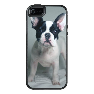 French Bulldog Puppy At Attention OtterBox iPhone 5/5s/SE Case