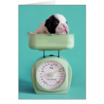 French bulldog puppy checking weight. greeting card