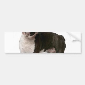 French bulldog - puppy dog - frenchie dog bumper sticker