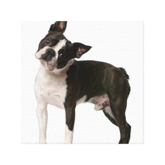 French bulldog - puppy dog - frenchie dog canvas print