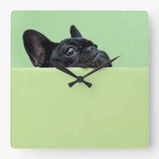 French Bulldog Puppy Peering Over Wall Square Wall Clock