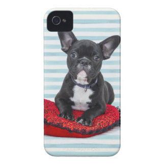 French Bulldog Puppy Portrait iPhone 4 Cover