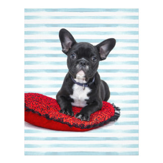 French Bulldog Puppy Portrait Letterhead