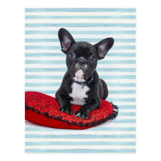 French Bulldog Puppy Portrait Postcard