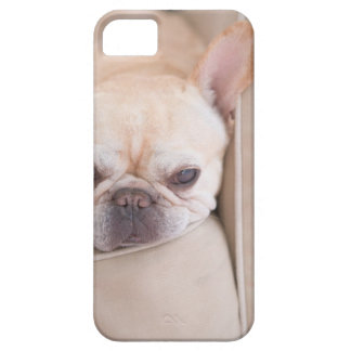 French bulldog resting on sofa iPhone 5 case