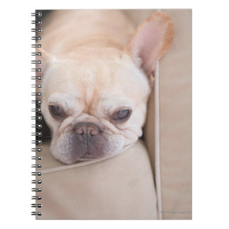 French bulldog resting on sofa spiral notebook