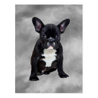 French Bulldog Sitting Watercolor Oil Painting Postcard