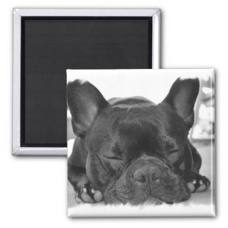 French Bulldog Square Magnet