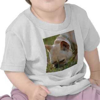 French Bulldog Tshirt