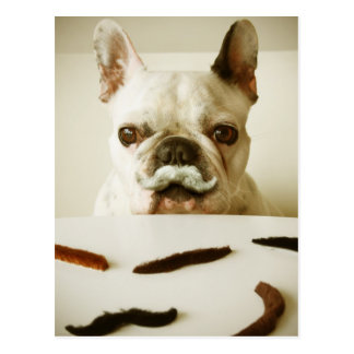 French Bulldog With A Mustache Postcard