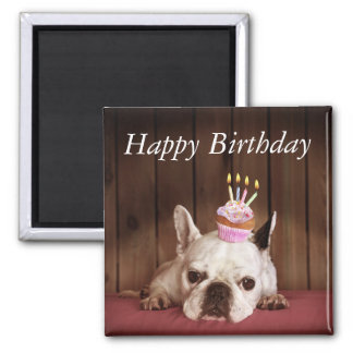 French Bulldog With Birthday Cupcake Magnet
