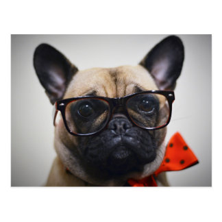 French Bulldog With Glasses And Bow Tie Postcard