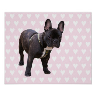 French Bulldog with pink & white hearts poster