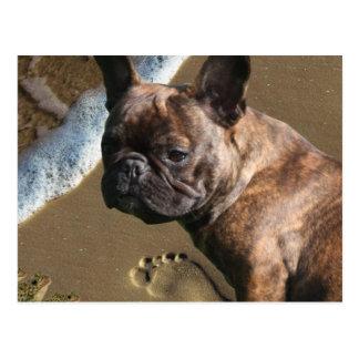 French Bulldogge postcard
