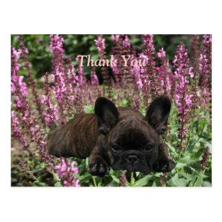 French Bulldoggen postcard Thank You
