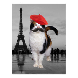 how to say cat in french