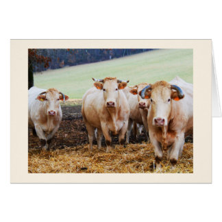 French cows card