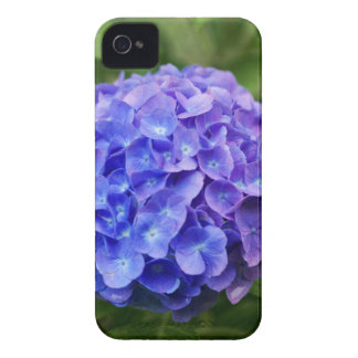 French hydrangea (Hydrangea macrophylla) iPhone 4 Case-Mate Case