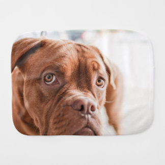 French Mastiff Burp Cloth