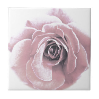 French Pink Rose Tile