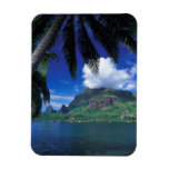 French Polynesia, Moorea. Cooks Bay. Green Magnet