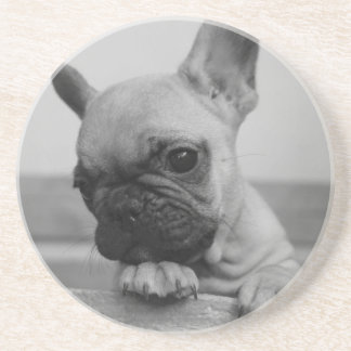 Frenchie puppy coaster