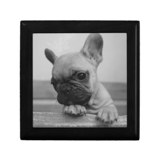 Frenchie puppy gift box