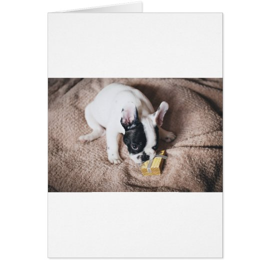 Frenchie With a Gift Card