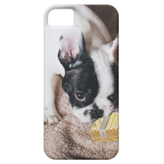 Frenchie With a Gift iPhone 5 Case