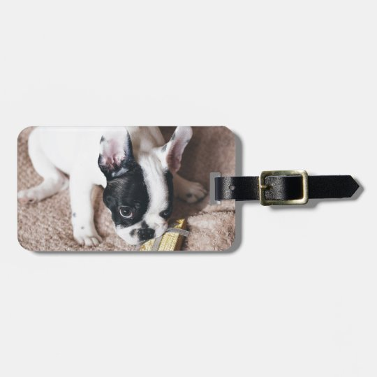 Frenchie With a Gift Luggage Tag