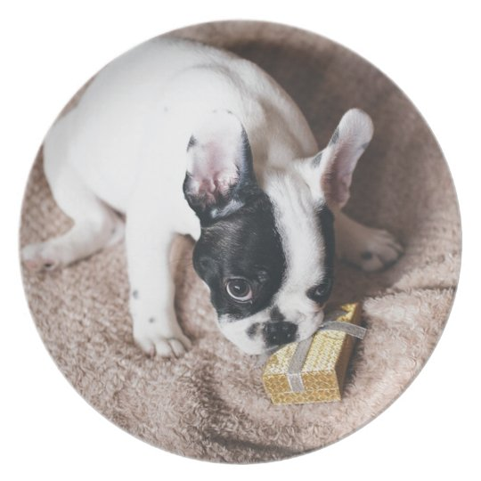 Frenchie With a Gift Plate