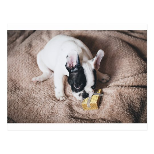 Frenchie With a Gift Postcard