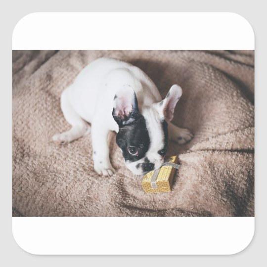 Frenchie With a Gift Square Sticker