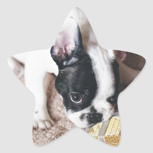 Frenchie With a Gift Star Sticker
