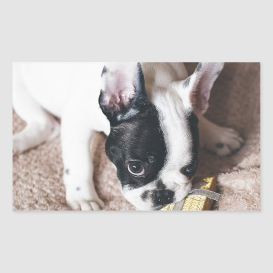 Frenchie With a Gift Sticker