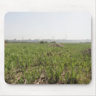 Fresh and dried grass in Okhla Bird Sanctuary Mouse Pads