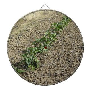 Fresh basil plants growing in the field dartboard