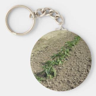Fresh basil plants growing in the field keychain