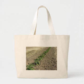 Fresh basil plants growing in the field large tote bag