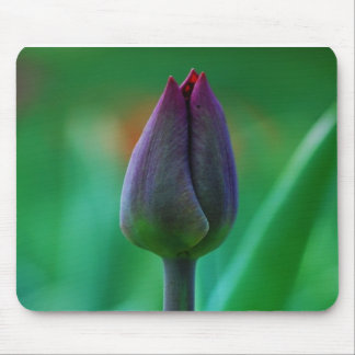 Fresh Blooming Purple Tulip Mouse Pad