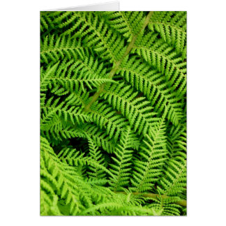 Fresh Ferns Card