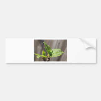 Fresh Fig Leaf Bumper Sticker
