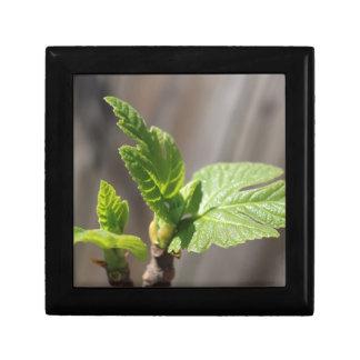 Fresh Fig Leaf Gift Box