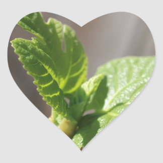 Fresh Fig Leaf Heart Sticker