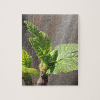 Fresh Fig Leaf Jigsaw Puzzle