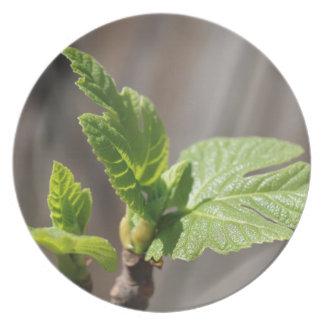 Fresh Fig Leaf Plate