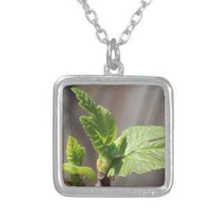 Fresh Fig Leaf Silver Plated Necklace