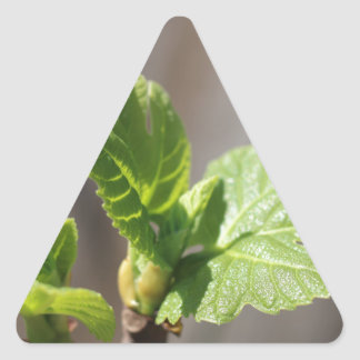 Fresh Fig Leaf Triangle Sticker